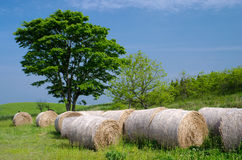 Several hay bale roll Stock Image