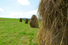 Several hayrick on the green field Stock Photography