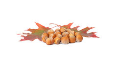 Several hazelnuts and colorful leaves on a white. Royalty Free Stock Image