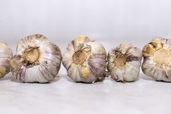 Several heads of spicy garlic on the table Royalty Free Stock Images