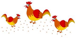 Several hen pecking grain Stock Photo