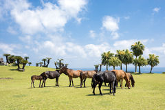 Several horses of seashore Royalty Free Stock Photography
