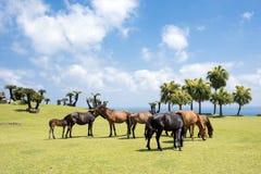 Several horses of seashore Royalty Free Stock Photography