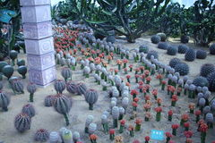 Several kinds of cactus Royalty Free Stock Photo