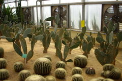 Several kinds of cactus Royalty Free Stock Images