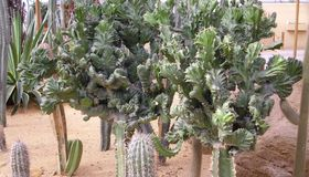 Several kinds of cactus Royalty Free Stock Photos