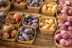 Several kinds of Heirloom Potatoes Royalty Free Stock Image