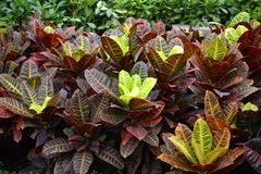 Several kinds of leaves Royalty Free Stock Photos