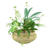 Several kinds of plants in the pot Royalty Free Stock Photos
