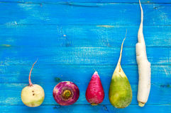 Several kinds of radish daikon, Chinese red, green on a blue sapphire wooden background. Useful vitamins ingredient for salads Stock Image