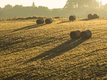 Several large round bales of hay laying in a crop field royalty free stock images