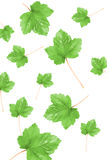 Several leaves Royalty Free Stock Photography