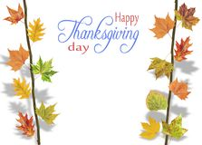 Several leaves hanging on tree branch for thanksgiving. Close royalty free stock photo