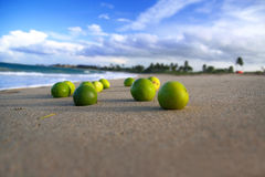 Several limes on beach of Atlantic ocean Stock Images