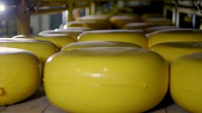 A warehouse storage of yellow cheese wheels. stock footage