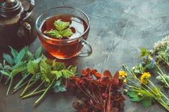 Several medicinal plants and herbs, healthy herbal tea cup and vintage copper tea kettle. Herbal medicine