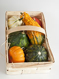 Several mini pumpkins. Mini pumpkins in several colors on white Royalty Free Stock Images