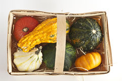 Several mini pumpkins. Mini pumpkins in several colors on white Royalty Free Stock Photos