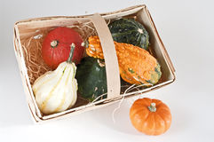 Several mini pumpkins. Mini pumpkins in several colors on white Stock Images
