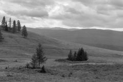 Lonely fir in the Altai mountains, black and white photo, Russia royalty free stock photos