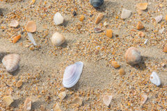Several multi colored sea shells lie on the sea sand Stock Image
