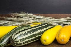 Several multicolored zucchini and inscription space Stock Photography