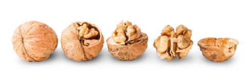 Several Nuts Lying In A Row Royalty Free Stock Photo