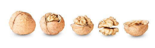 Several Nuts Lying In A Row Royalty Free Stock Images