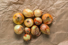 Several onions on crumpled paper Stock Photography