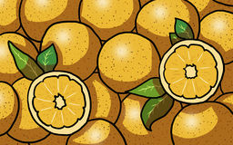 Several oranges illustration. Several oranges on white Background, illustration Royalty Free Stock Photos