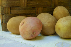 Several Organic Russet potatoes and a single organic red in fron Royalty Free Stock Photos