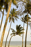 Several palms under the blue sky Stock Image
