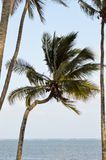 Several palms under the blue sky Royalty Free Stock Images
