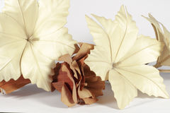 Several paper flowers, cream and brown. Several decorative paper flowers of different forms and colors (brown and cream), isolated on white background Stock Photos