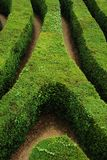 A spiral confusing hedgerow spiral maze Stock Images