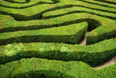 A spiral confusing hedgerow spiral maze. Several paths leading through a confusing spiral hedgerow maze stock photography
