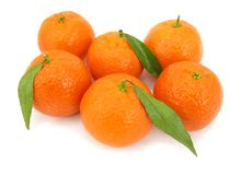 Several perfect oranges wiht leaves Royalty Free Stock Image