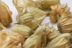 Several Physalis fruits against a white background Stock Images