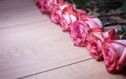 Several pink roses on a wooden background Stock Photo