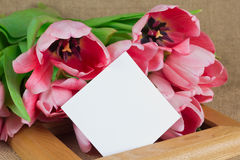Several pink tulips with little postcard lying on the frame Stock Photos