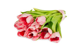 Several pink tulips with satin ribbon isolated Royalty Free Stock Photos
