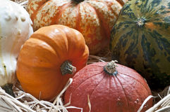 Several pumpkins. Several colored pumpkins in a basket Royalty Free Stock Photography