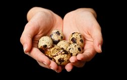 Several quail eggs Royalty Free Stock Photos