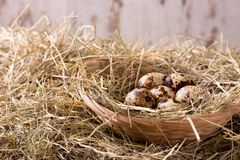 Several quail eggs in a nest from straw Stock Photo