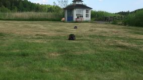 Several radio controlled toy cars driving on lawn on summer day. Hobby concept.  stock footage