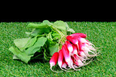 Several radish on grass. Several radish with leaves on grass Stock Photo