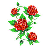 Several red roses with leaves Royalty Free Stock Images