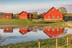Several red wooden houses reflected in pond. Several red wooden farm houses reflected in pond on very early summer morning. Scandinavia Stock Images