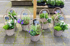 Several reed baskets with flowering plants on ground Royalty Free Stock Photography
