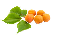 Several ripe apricot and a branch with leaves closeup Stock Image